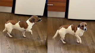 Guilty Dog Pretends To Be A Statue After Pooping Indoors
