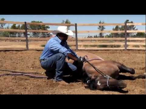 How to Lay Down a Horse