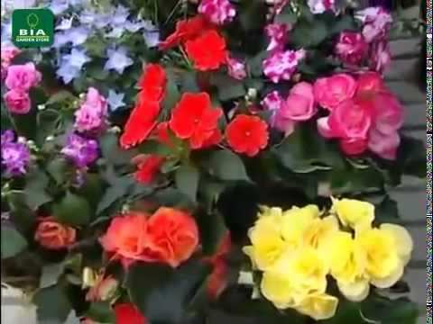 Un balcone fiorito tutto l 39 anno youtube for Giardini fioriti tutto l anno