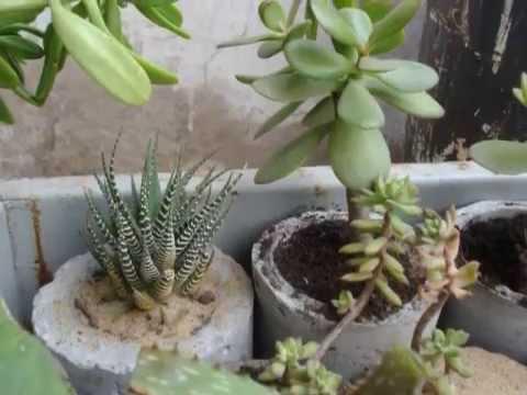 Cactus espinosos en macetas youtube - Cactus en macetas pequenas ...