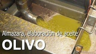 Almazara. Procesado de Aceituna. Elaboración de Aceite YouTube Videos
