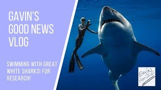 SWIMMING WITH A GREAT WHITE SHARK IN HAWAII - VIDEO NEWS