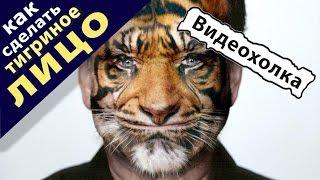 Как сделать тигриное лицо в Photoshop(Видеоурок для новичков, кто учится работать на компьютере: