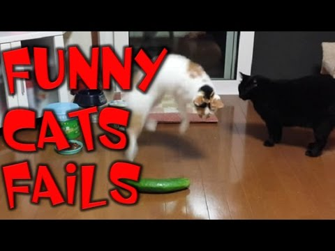 Funniest Cats Video - Cats Fails - Cats really afraid cucumber | SHtv | part 30