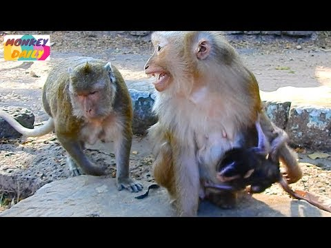 Ashley Kidnapped Mia From Maria, Ashley So Scare Maria Follow Her Get Baby Back, Monkey Daily 5359