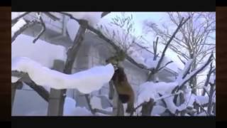 Самые смешные ролики про животных 23