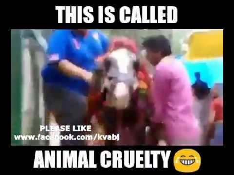 Animal cruelity...lol