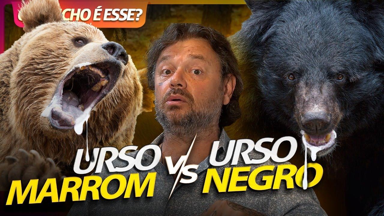URSO KODIAK VS URSO NEGRO, GIGANTES FEROZES! | RICHARD RASMUSSEN