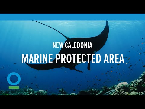 New Caledonia's Natural Park of the Coral Sea   Conservation International (CI)