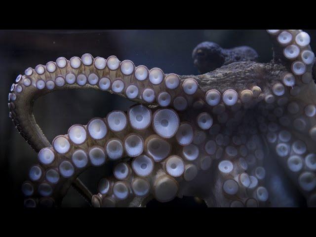 World's first Octopus photographer