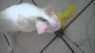Psycho Katze