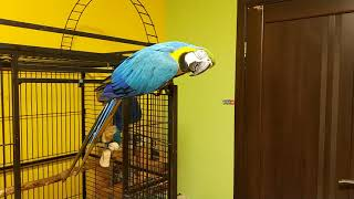 Попугай ара согласен на любой кипиш 😂