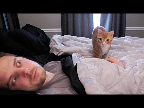7 Ways Cats Creep You Out!