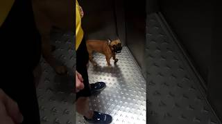 Сосед с собакой без поводка #1