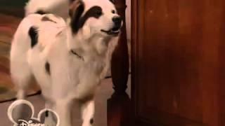 Собака точка ком   1 сезон 17 4 серия!
