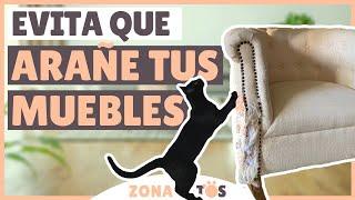 Cómo EVITAR que tu gato ARAÑE LOS MUEBLES