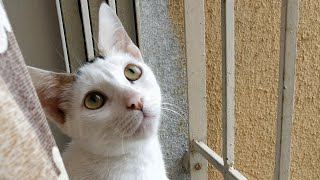 Curious Kitten | Funny Cat video