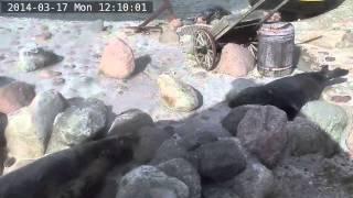 Fokarium w Helu na żywo / Webcam - Odwiedziny 2