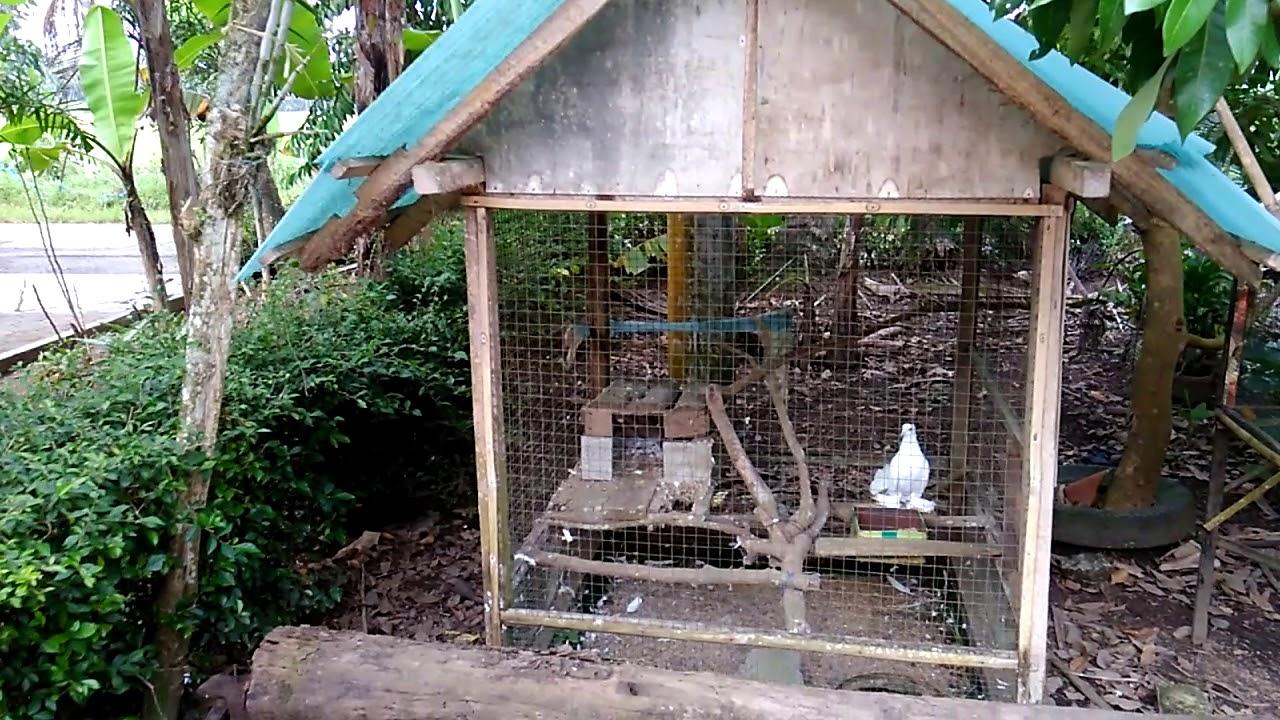 Kandang Burung Hias Depan Rumah - Tentang Kolam Kandang Ternak