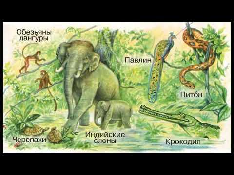 """Окружающий мир 1 класс, тема урока """"Где живут слоны?"""", с.14-15, Школа России."""