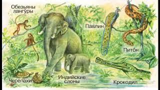 Окружающий мир 1 класс, тема урока Где живут слоны?, с.14-15, Школа России.