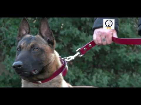 Arab dogs school  channel