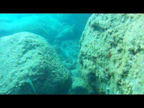 Madeira Marine Fauna: Aluterus scriptus