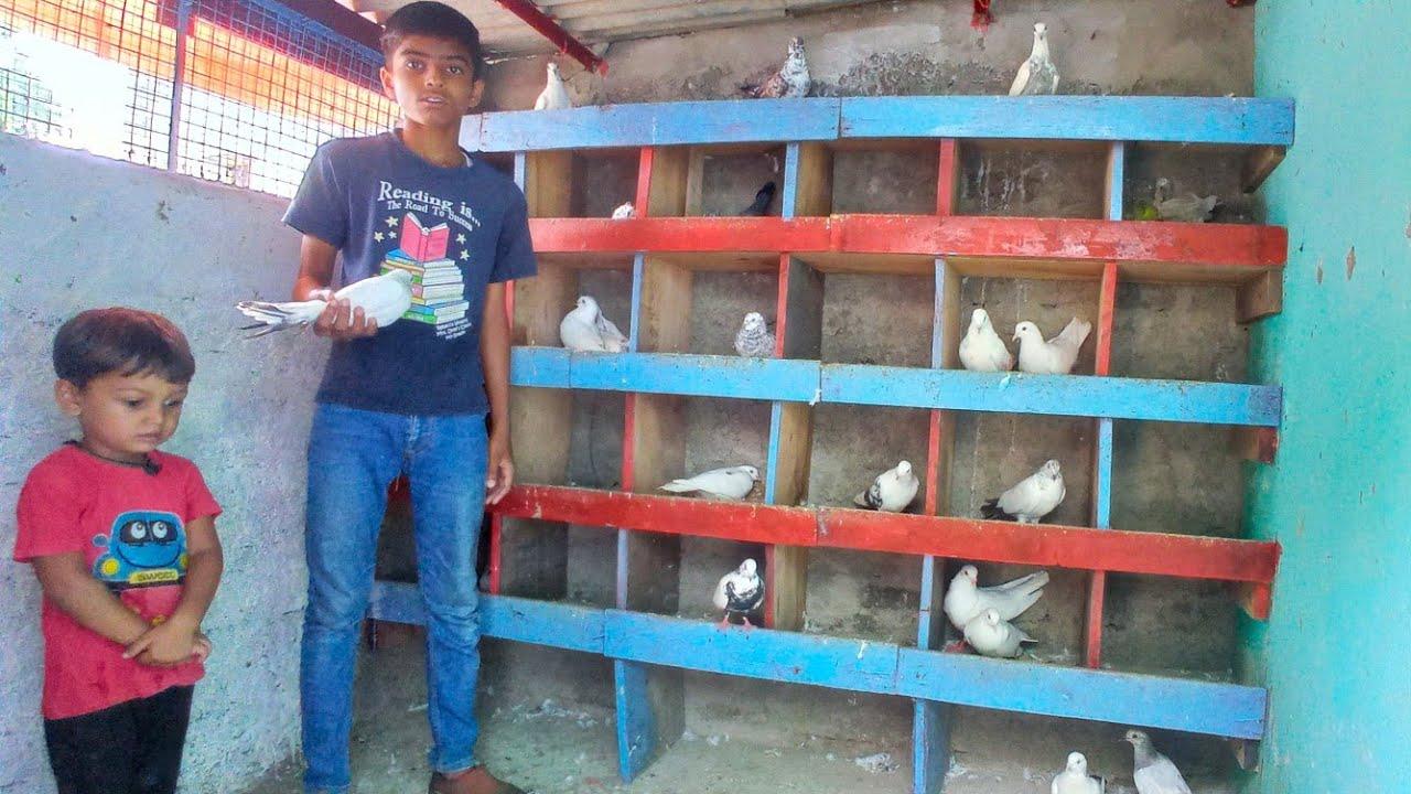 Pigeon in Khandwa    Kadeer Bhai ke high flying pigeon    high flyer pigeon    P1
