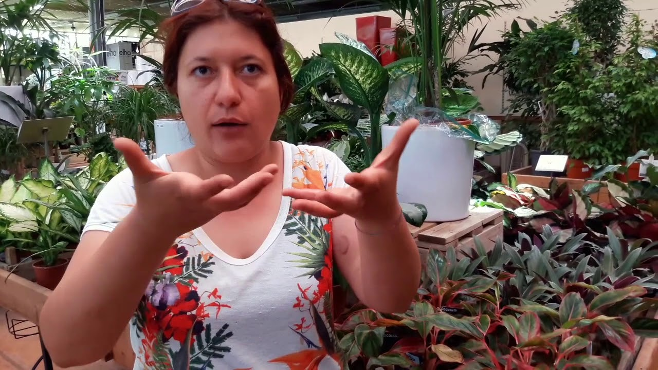 Quando e quanto vanno bagnate le piante da interno? - YouTube