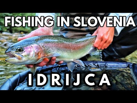 Idricja Trophy HYBRID Trout - The BEST Dry Fly Fishing In Slovenia?!