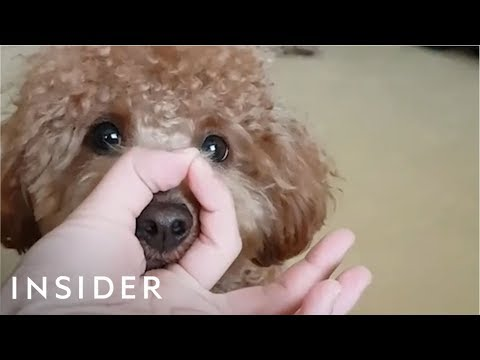 Dogs Everywhere Are Doing The Snoot Challenge