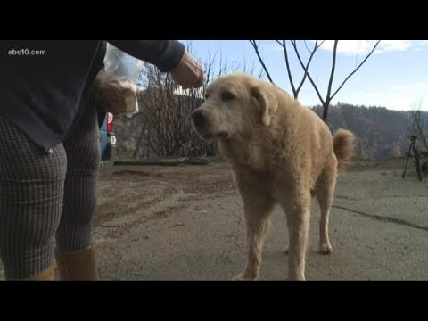 Martha Quinn - Camp Fire Dog Waits For Weeks For Owners To Return Home
