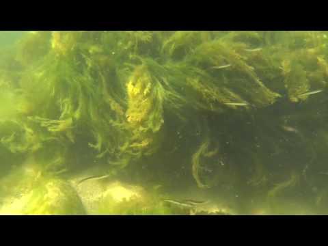 Балтийское море, подводная съемка.