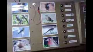 Demonstration Of Animal Sound Boards