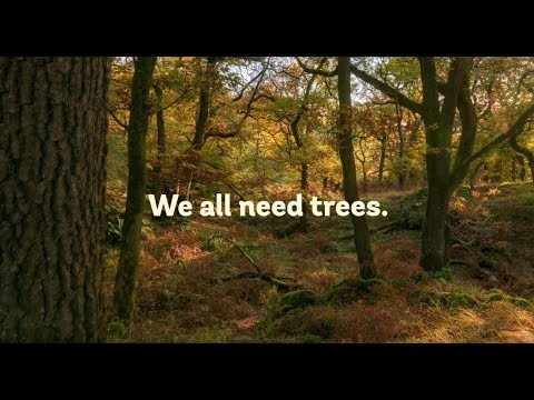 Let's stand up for trees: become a partner of the Woodland Trust.