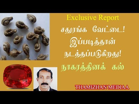 நாகரெத்தினம் உண்மையா? | Nagarathinam Stone | King Cobra pearl | Srikrishnan