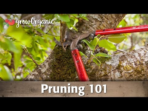 Orchard and Fruit Tree Pruning 101
