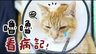 【黃阿瑪的後宮生活】嚕嚕看病記! thumbnail