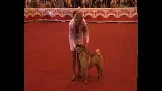 Dragon De Koshi Shar-pei Kennel