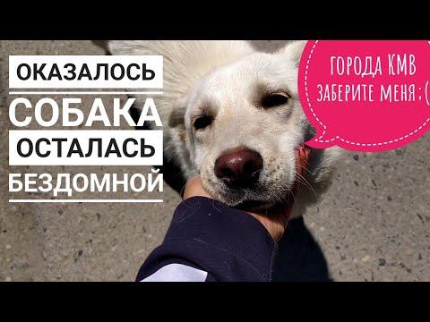 Вопрос: Как поймать бездомную собаку?
