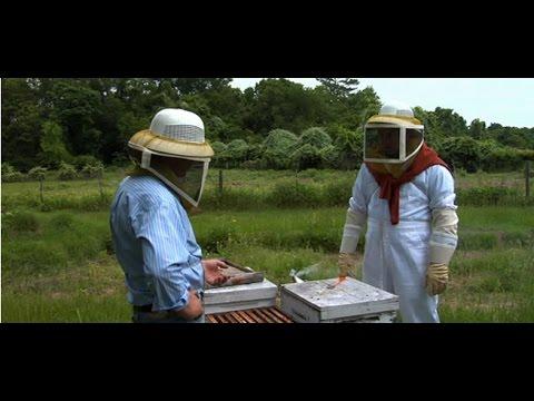 Episode 2 - Meet A Healthy Hive