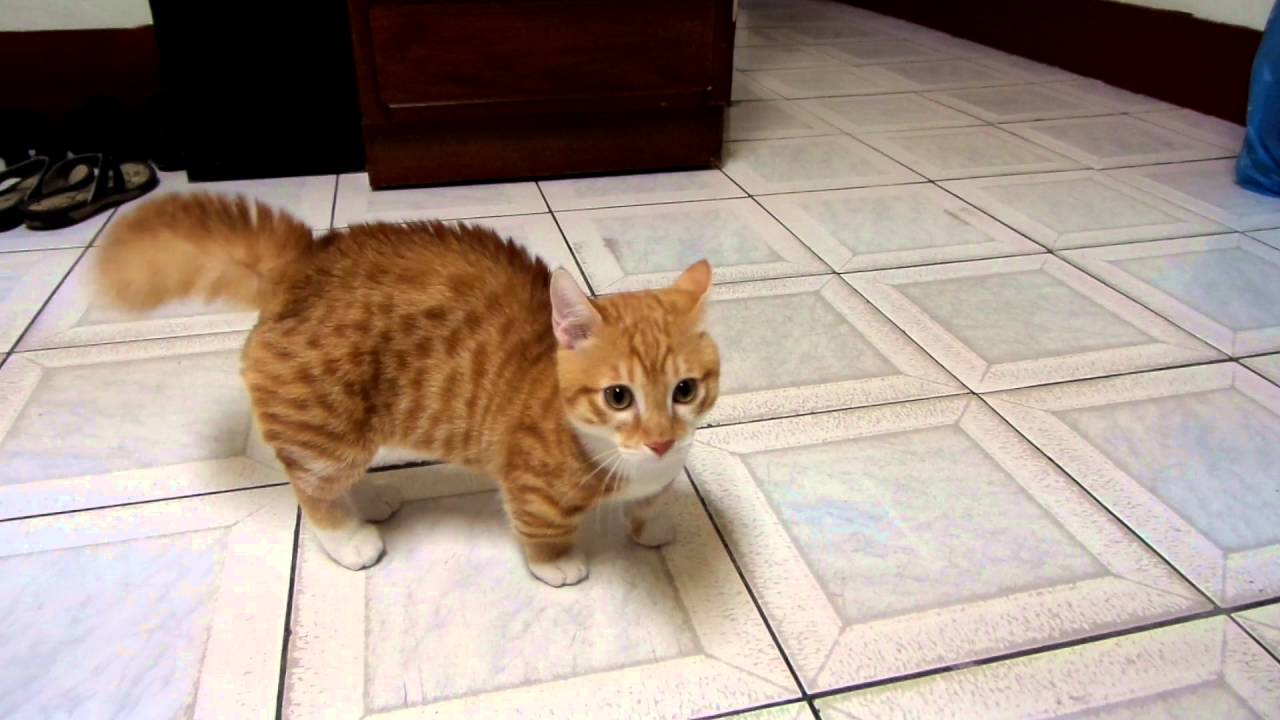 很愛炸毛的貓 - YouTube