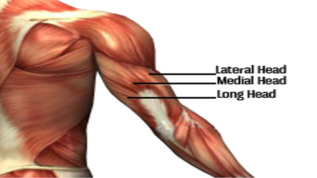 Exercises Work all three heads of the triceps - YouTube