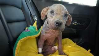 Villalobos Rescue - Veterinary Bill Needs Help!