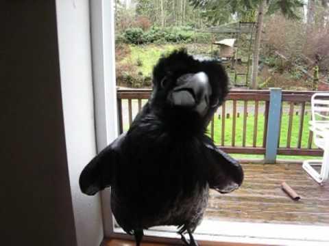 Ravenmania Nevermore YouTube