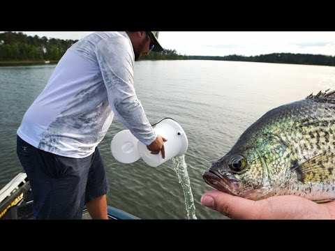 Catch n Cook Crappie Fishing Challenge - Cheating with Secret Bait!