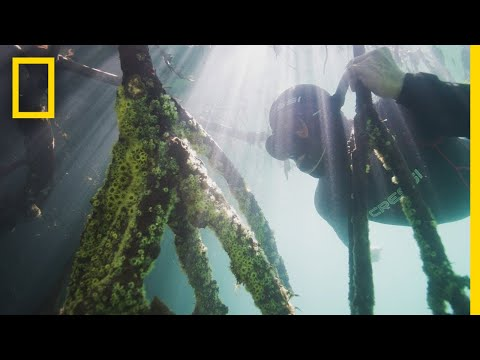 Measuring Mangroves | Explorers in the Field