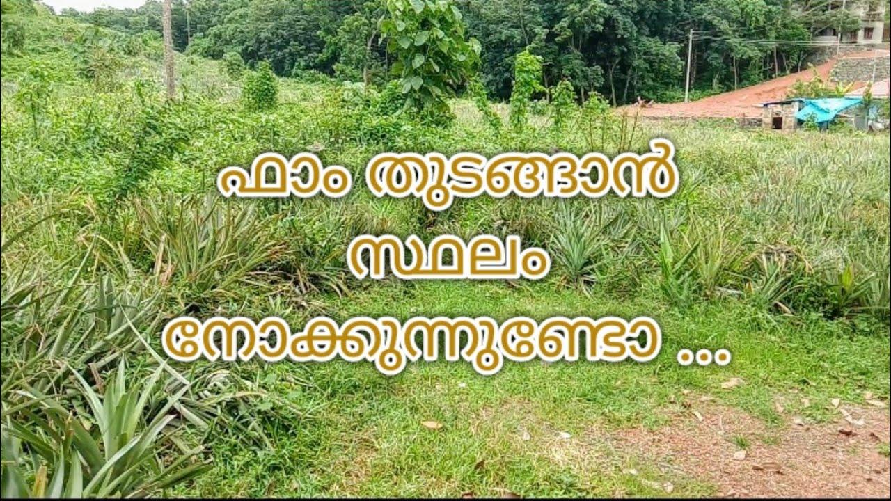 ഫാം തുടങ്ങാൻ പററിയ സ്ഥലം    plot for sale in ernakulam district  9846489659,9446740644   1Lak / cent