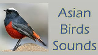 Asian Birds Sounds Android App