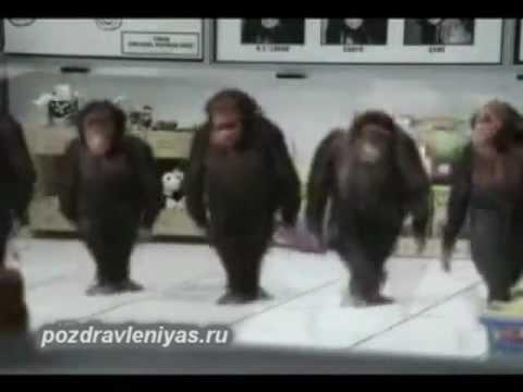 Прикольное поздравление от танцующих обезьян. Смешно! - Видео с YouTube на компьютер, мобильный, android, ios